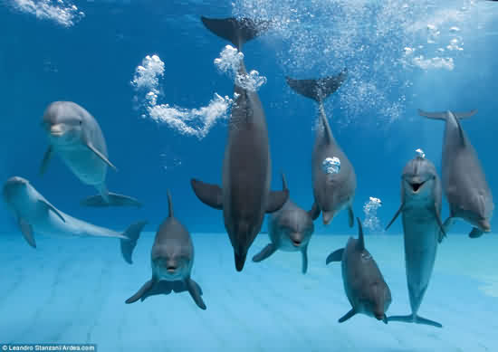 壁纸 海底 海底世界 海洋馆 水族馆 550_389